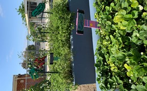 Eisenhower Garden - article thumnail image
